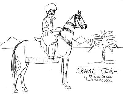 The Akhal Teke
