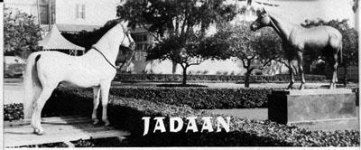 Two Great Horses Jadaan Visits The Statue Of Immortal Seabiscuit At Southern Californias Famous Santa Anita Race Track A Special Platform Was Built