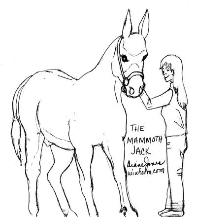 the mammoth jack All Breeds of Dogs most of us can recognize a donkey the very first donkey was thought to be the syrian wild ass whose descendants were described in both the bible and in